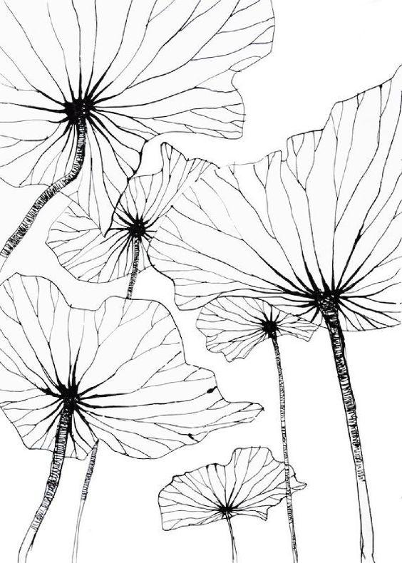 Lotus by Stephanie Ledoux