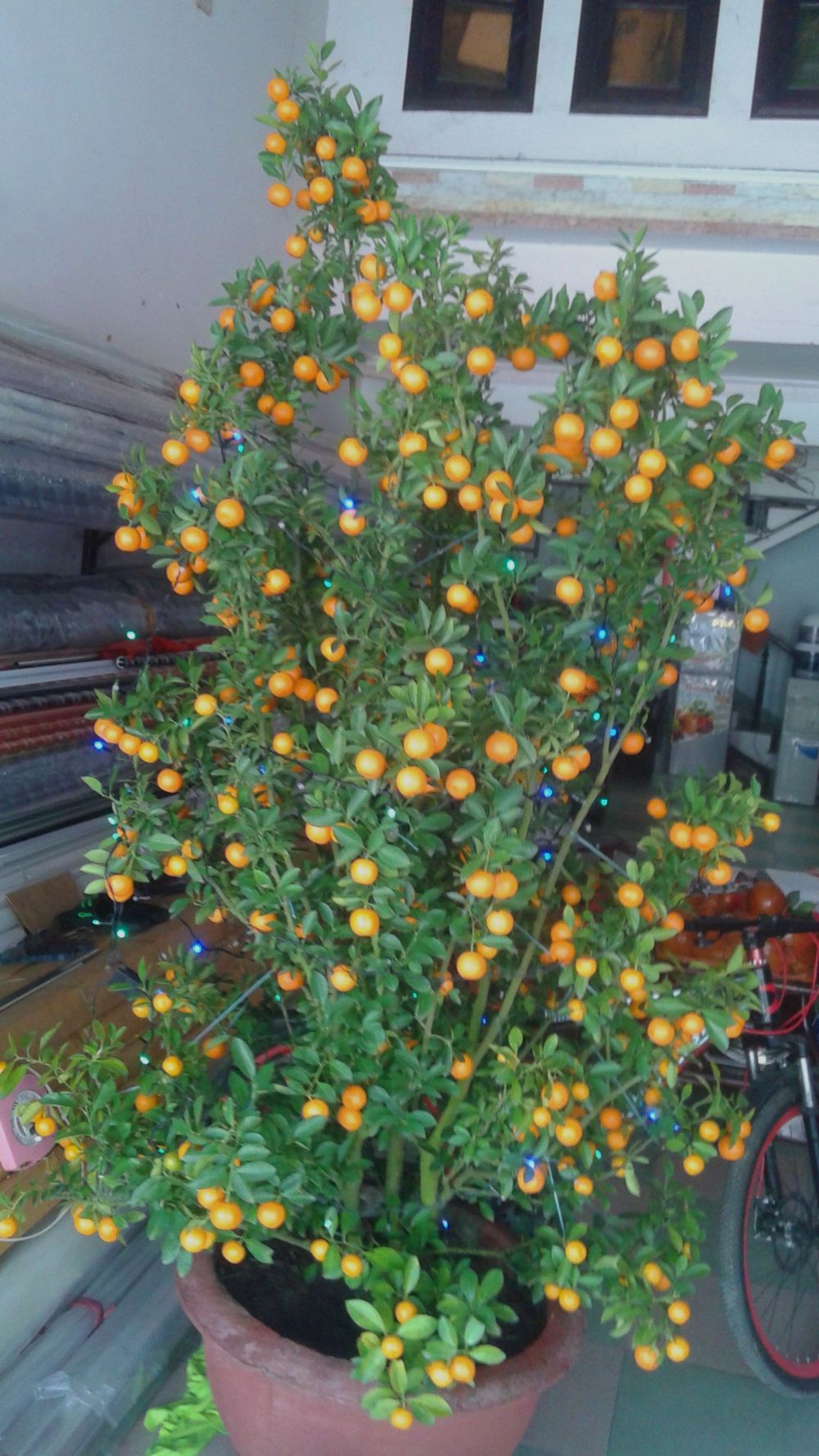 OrangeTreeLights